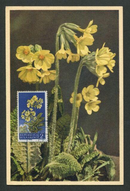 SAN MARINO MK 1957 FLORA SCHLÜSSELBLUME MAXIMUMKARTE MAXIMUM CARD MC CM d7067