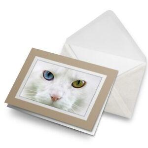 Greetings-Card-Biege-Adorable-White-Cat-Kitten-3705