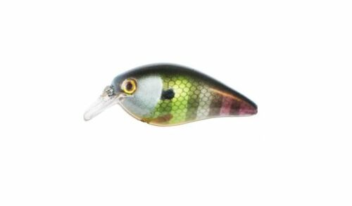 Neon Bluegill KVD 1.5 Silent Square Bill