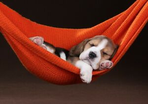 Cute-Sleeping-Beagle-Puppy-Poster-Size-A4-A3-Dog-Animals-Poster-Gift-8432