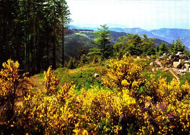 Schwarzwald , Ansichtskarte, ungelaufen