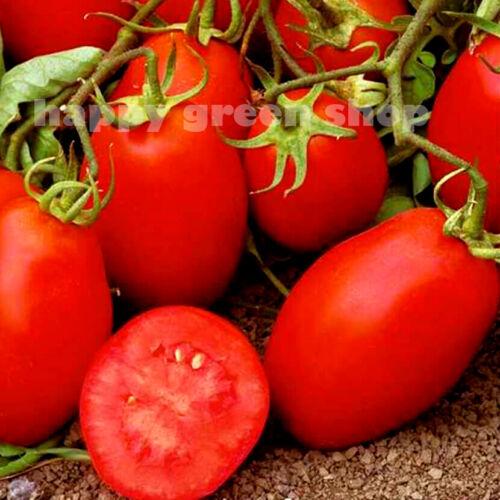 TOMATO BEST TOMATO SEEDS ROMA VF 450 SEEDS VEGETABLE