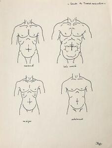 Beau Dessin Vintage 1941 Etude Anatomique Anatomie Torse Masculin Art Deco 5 Ebay