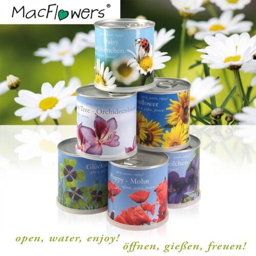 Blumen in der Dose von MacFlowers Fußballrasen