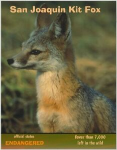 The San Joaquin Kit Fox, an Endangered Species card by PostcardsTo SaveThePlanet