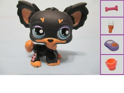 Littlest Pet Shop Dog Puppy Chihuahua Tan Brown 1 and Free Accessory Lps