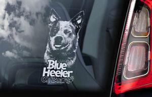 Azul-Heeler-Coche-Ventana-Pegatina-Australiano-Ganado-Perro-Placa-Signo-V01
