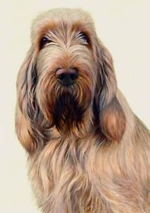 Nigel Hemming JUST DOGS - WHITE & ORANGE ITALIAN SPINONE Spinoni Gun Dogs Art