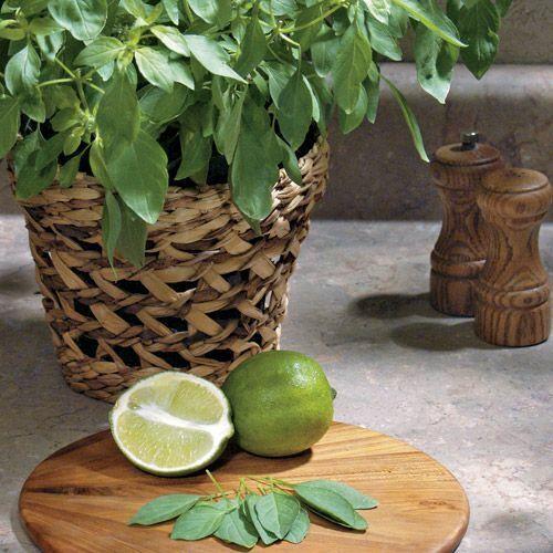 Seeds Basil Lemon Green Vegetable Organic Heirloom Russian Ukraine