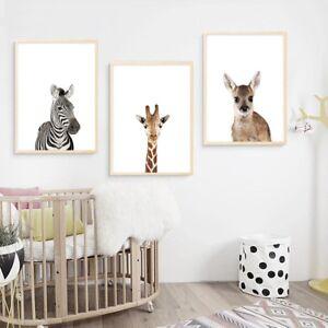 Zebra Koala Baby Animal Canvas Poster