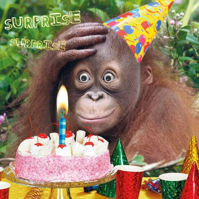 Funny Humour Greeting Card Happy Birthday 3d Moving Eyes Monkey