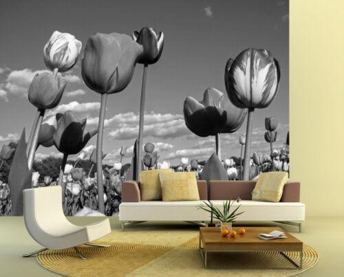 Fototapete Tulpen