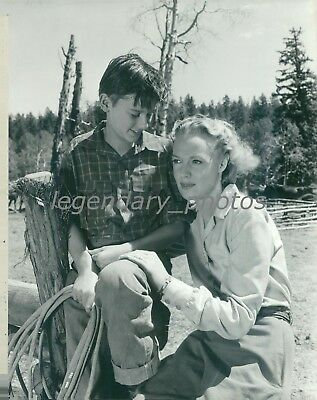 1943 My Friend Flicka Roddy Mcdowell Rita Johnson Original Press