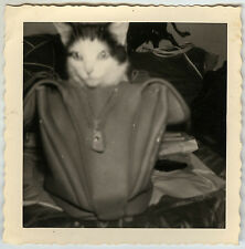 PHOTO ANCIENNE - VINTAGE SNAPSHOT - CHAT SAC BAGAGE DRÔLE - CAT BAG FUNNY
