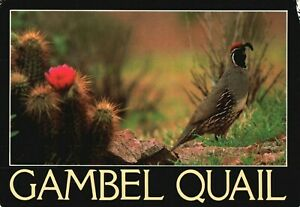 Greeting-Card-Showing-A-Photo-of-Gambel-Quail-Vintage-Stamped-Postcard-A28