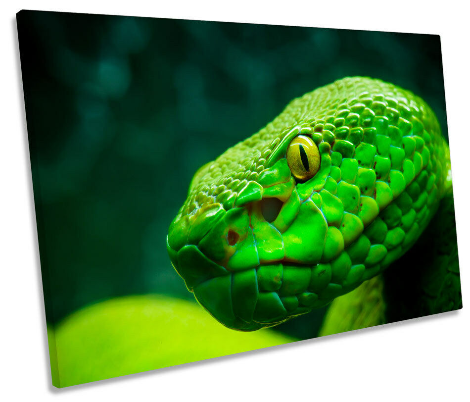 Grün Tree Python Snake SINGLE CANVAS WALL ART Print Picture