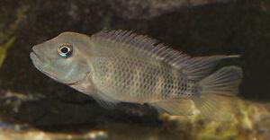 thefishwiki.net - The Aquarium Wiki