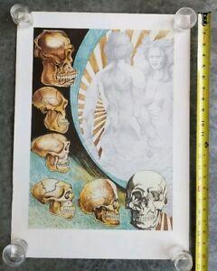 Details about THE EVOLUTION OF CRO-MAGNON MAN HUMAN SKULLS ADAM & EVE  VINTAGE RELIGION POSTER