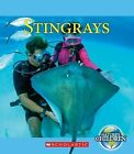 Stingrays by Jennifer Zeiger (Hardback, 2012)