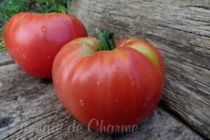 10 graines de tomate rare Frankenstein Black heirloom tomato seeds méth.bio