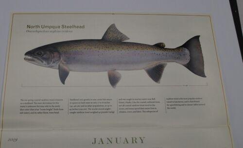 2009 Trout of North America Calendar Print by Joseph Tomelleri Never Open