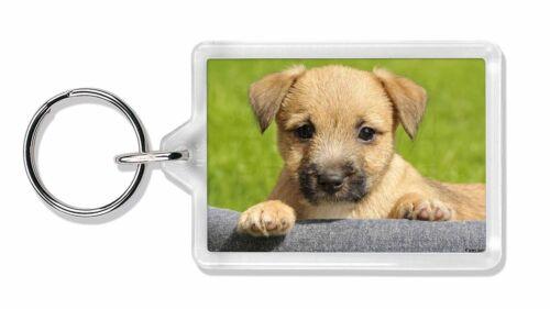 Border Terrier Puppy Photo Keyring Animal Gift, AD-BT4K