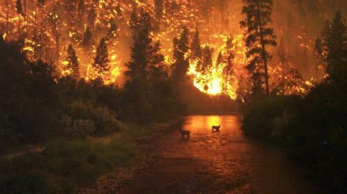 FIRE ON EARTH GLOSSY POSTER PICTURE PHOTO BANNER bitterroot montana forest 5422