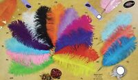 Large Big Ostrich Feathers Plummage Plume Pluma Fluff Quill Color Wedding Bulk
