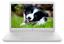 HP-Stream-14-034-FHD-Laptop-Intel-Dual-Core-N4000-64GB-SSD-4GB-RAM-BT-Webcam-Win-10 miniatura 1