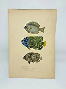 Fish-Plate-98-Lacepede-1832-Hand-Colored-Natural-History