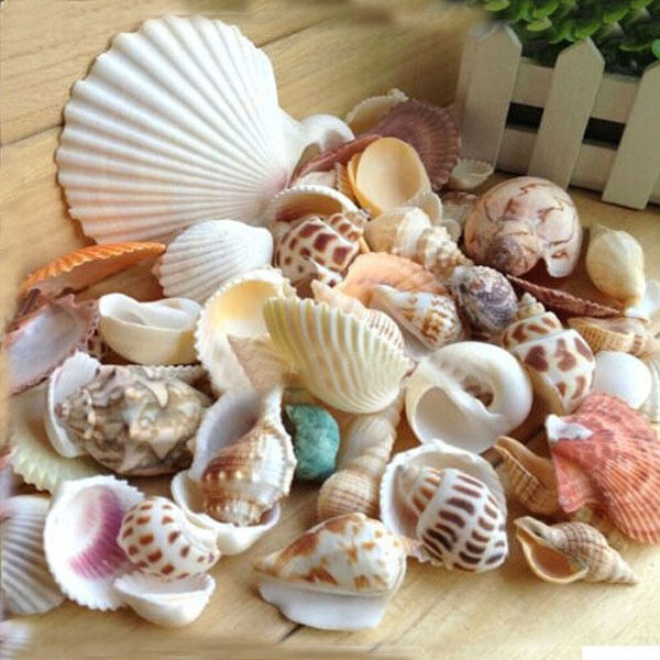 REAL MIXED NATURAL BEACH SEA SHELL CRAFT WEDDING GARDEN AQUARIUM JEWELRY Free
