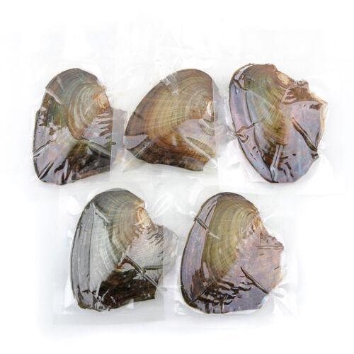 Nouveau huîtres avec naturel perle cadeau des fêtes 25pcs emballés individuellement