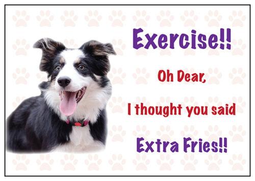Funny Border Collie Dog Vinyl Car Van Decal Sticker Pet Animal Lover