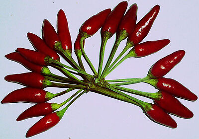 Piri Piri Chili 10 Samen (Massenträger), Chilisamen