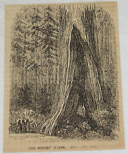 1859-magazine-engraving-THE-MINER-039-S-CABIN-giant-tree-forest