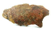 580 Gram Large Arizona Petrified Wood Cab Cabochon Slab Gem Rough Specimen Us45