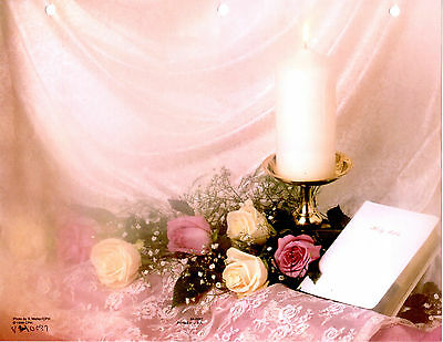 """Lace 8 1//2/"""" x 11/""""  PACK OF 85 Rings White Bible Wedding Bulletin Pink Roses"""