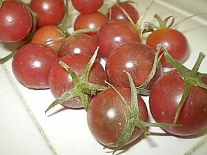 Details about Light Blue Cherry heirloom tomato seeds non-gmo DIFFERENT  UNIQUE STRAIN