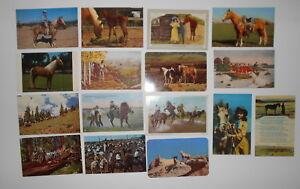LOT-OF-16-HORSES-COWGIRLS-COWBOYS-POSTCARDS-BRONCHO-STALLION-COLT-ETC