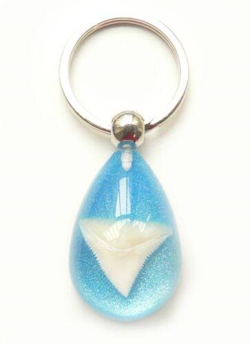 Shark Tooth Teeth Charm Key Ring//Chain Surfer Tropical Sea Blue