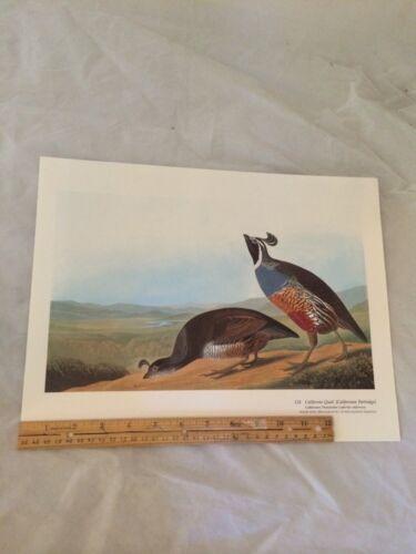 California Quail Partridge Audubon Bird Print Picture Poster Plate 128