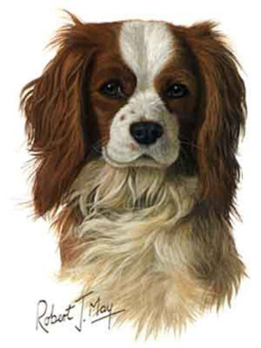 Cavalier King Charles Spaniel Brown Dog Robert May Art Greeting Card Set of 6