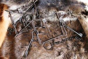 2 DUKE 220 BODY TRAPS RACCOON FOX BADGER MUSKRAT MINK  0420 new sale