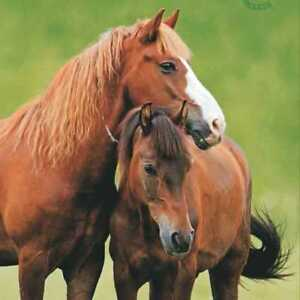 Serviette TI-FLAIR - Two Horses (33 x 33 cm) TGxNSayq-07213429-527302675