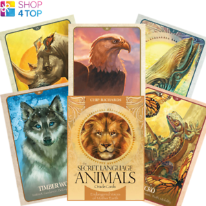 The-Secret-Language-Of-Animals-Oracle-Deck-Cards-Telling-Blue-Angel-New