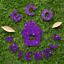 Hemway-Eco-Friendly-Glitter-Biodegradable-Cosmetic-Safe-amp-Craft-1-24-034-100g thumbnail 223