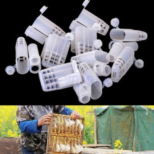 10Pcs Plastic Queen Bee Cages Isolator Rearing Beekeeper Beekeeping Tools GL