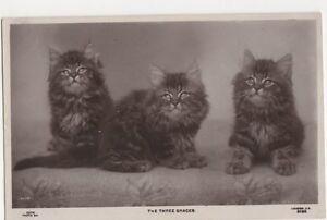 Cats-The-Three-Graces-1906-Rapid-Photo-RP-Postcard-B371