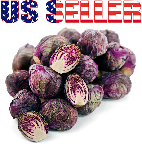 30+ ORGANICALLY GROWN Rubine Brussels Sprouts Purple Red Heirloom NON-GMO Rare