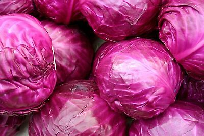 New Red Cabbage Clumbly Delicious Red Cabbage 1,200 Organic Seeds